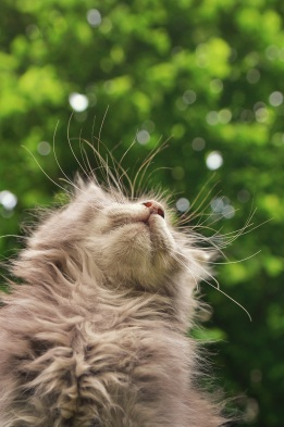 webDSC_7183 Shiny Whiskers